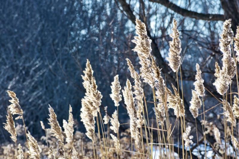 wild grass - thetemenosjournal.com