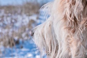 shnoggin doggin in winter - thetemenosjournal.com
