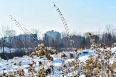 urban grass in winter landscape