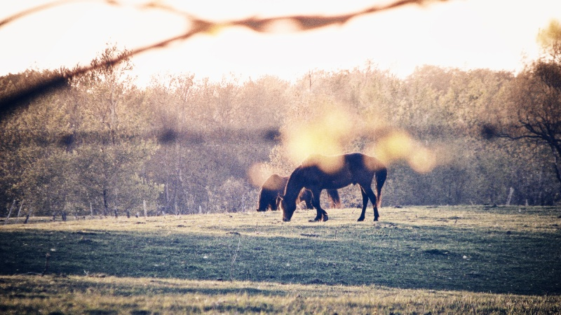 horses in a meadow in grey county ontario - thetemenosjournal.com