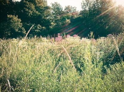 meadow wildflowers of summer - thetemenosjournal.com