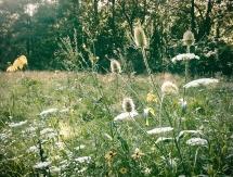 meadowslands of beauty