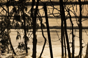 snow on cedars before dawn - thetemenosjournal.com