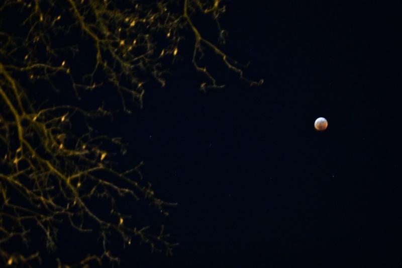 super blood wolf moon 012119