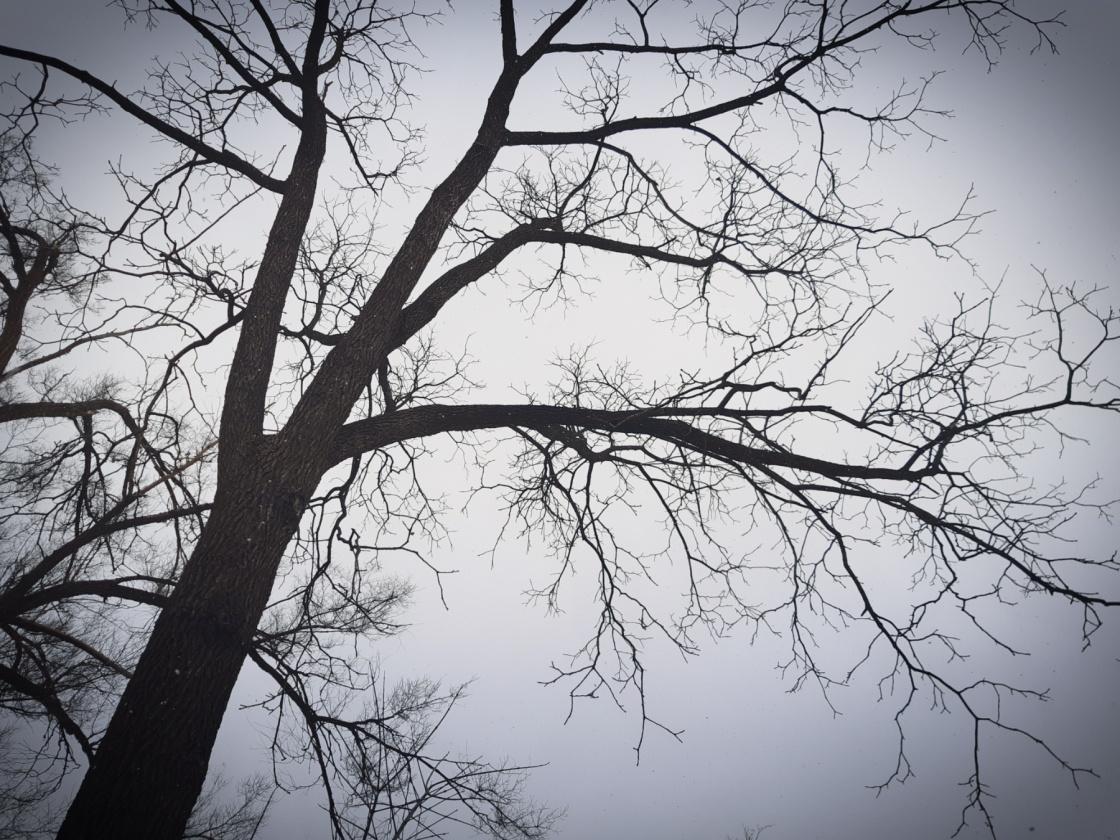 Black Walnut Tree On A Gray Day - thetemenosjournal.com