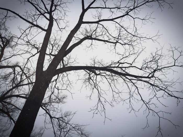 Black Walnut Tree On A Gray Day - thetemenosjournal.com