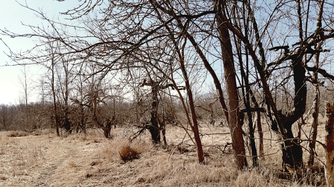 abandon-apple-orchard-2