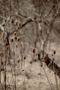 seedheads-in-early-spring