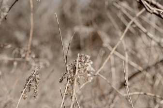 seedheads-in-spring-2