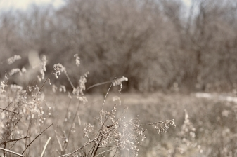 seedheads-in-spring-3