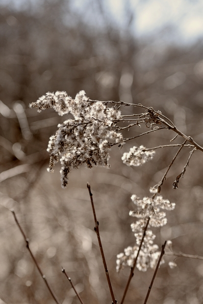 seedheads-in-spring-4
