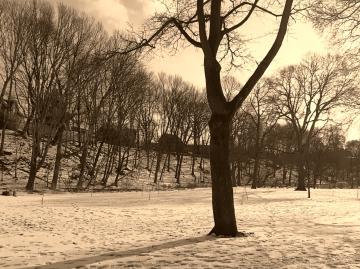 thames park view of wortley 2019 winter - london ontario canada - thetemenosjournal.com