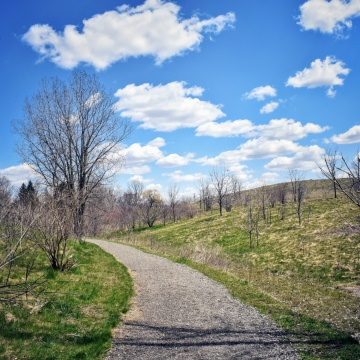 Blue Skies and A Pathway thru a meadow