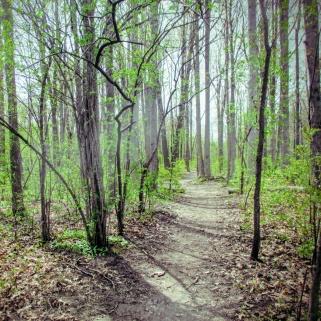 euston woods in spring