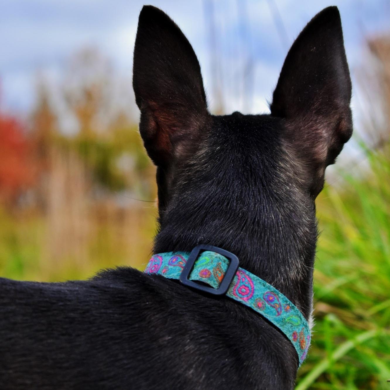 Pika Ears